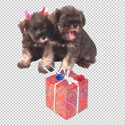 Клипарт щенки и подарок, для Фотошопа в PSD и PNG, без фона