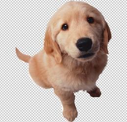 Клипарт щенок, для Фотошопа в PSD и PNG, без фона