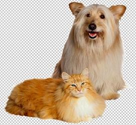 Клипарт собака и кошка, для Фотошопа в PSD и PNG, без фона