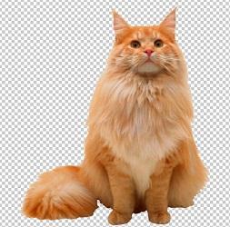 Клипарт пушистый кот, для Фотошоп в PSD и PNG, без фона