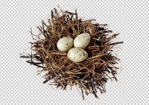 Клипарт гнездо с яйцами, фото для Фотошоп в PSD и PNG, без фона