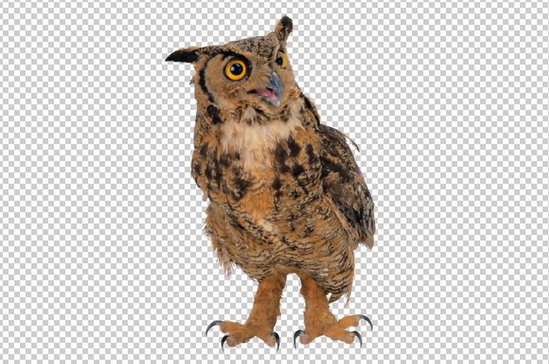Клипарт сова, фото для Фотошоп в PSD и PNG, без фона