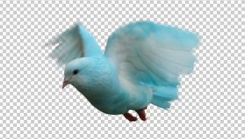 Клипарт голубой голубь, фото для Фотошоп в PSD и PNG, без фона