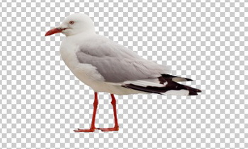 Клипарт чайка, фото для Фотошоп в PSD и PNG, без фона