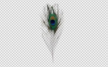 Клипарт перо павлина, фото для Фотошоп в PSD и PNG, без фона