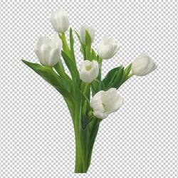 Клипарт цветы — белые тюльпаны букет, для Фотошоп в PSD и PNG, без фона