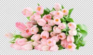 Клипарт цветы — букет розовых тюльпанов, для Фотошоп в PSD и PNG, без фона