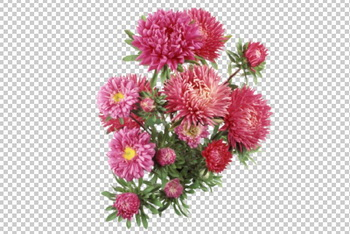 Клипарт букет хризантем, для Фотошоп в PSD и PNG, без фона