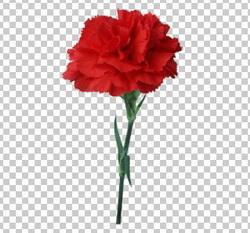 Клипарт красная гвоздика, для Фотошоп в PSD и PNG, без фона
