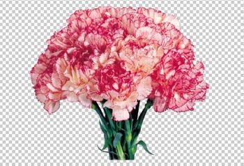 Клипарт букет розовых гвоздик, для Фотошоп в PSD и PNG, без фона