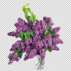Клипарт сирень в вазе, для Фотошоп в PSD и PNG, без фона