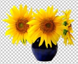 Клипарт подсолнухи в вазе, для Фотошоп в PSD и PNG, без фона