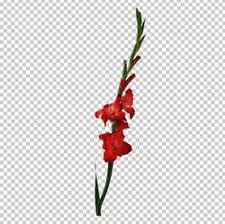 Клипарт гладиолус красный, для Фотошоп в PSD и PNG, без фона