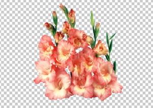 Клипарт гладиолусы розовые букет, для Фотошоп в PSD и PNG, без фона