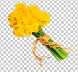 Клипарт нарциссы желтые, для Фотошоп в PSD и PNG, без фона