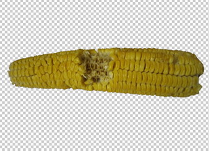 Клипарт кукуруза надгрызанная, для Фотошоп в PSD и PNG, без фона