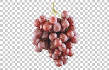 Клипарт веточка винограда, для Фотошоп в PSD и PNG, без фона