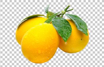 Клипарт веточка с лимонами, для Фотошоп в PSD и PNG, без фона