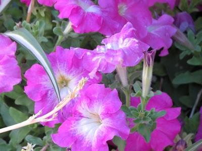 Ярко-розовые цветы — обои для рабочего стола, фотография высокого разрешения