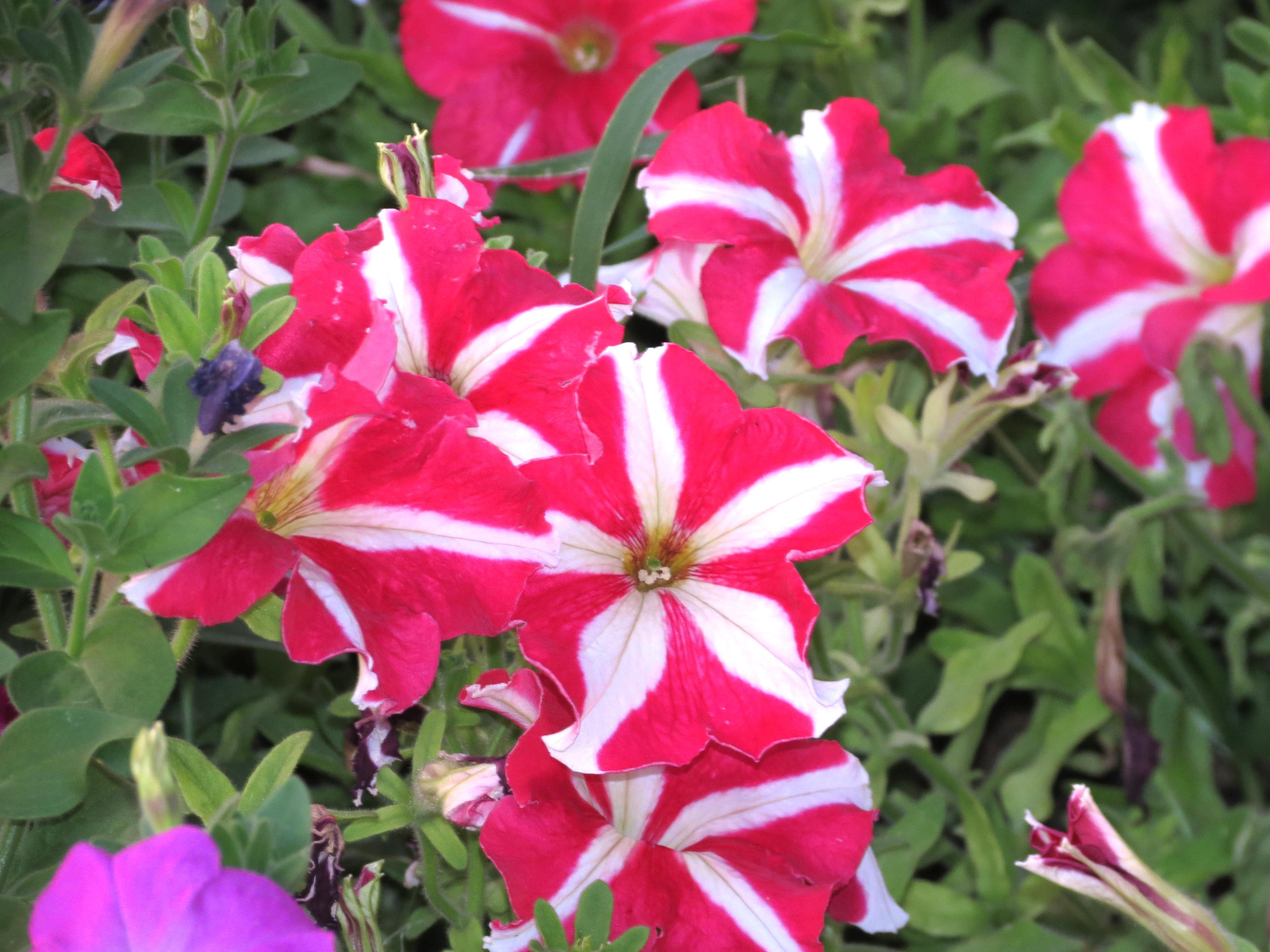 Бело-розовые цветы, обои для рабочего стола, фотография высокого разрешения