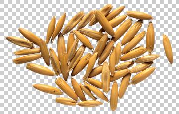 Клипарт зерно, для Фотошоп в PSD и PNG, без фона
