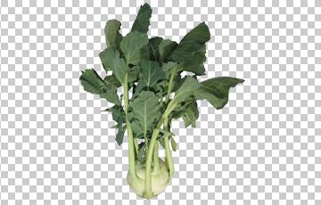Клипарт кольраби, для Фотошоп в PSD и PNG, без фона