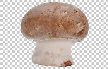 Клипарт большой гриб, для Фотошоп в PSD и PNG, без фона
