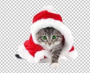 Клипарт новогодний котенок, в PNG и PSD, без фона
